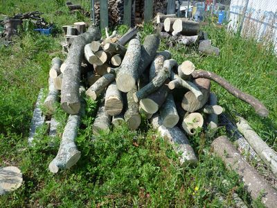 いつぞやの原木収集状況・・・文面とは無関係でした